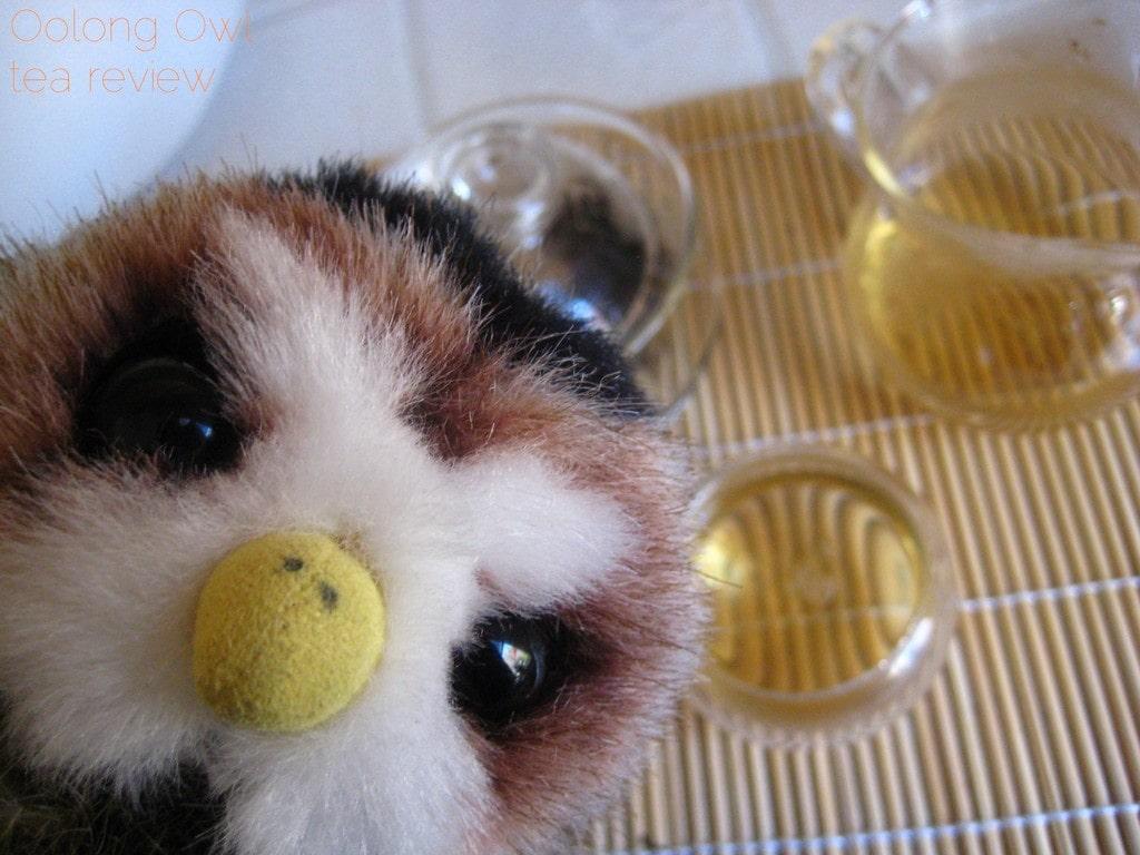 Mandarin Pu-er white tea from New Mexico Tea Co - Oolong Owl Tea Review (12)