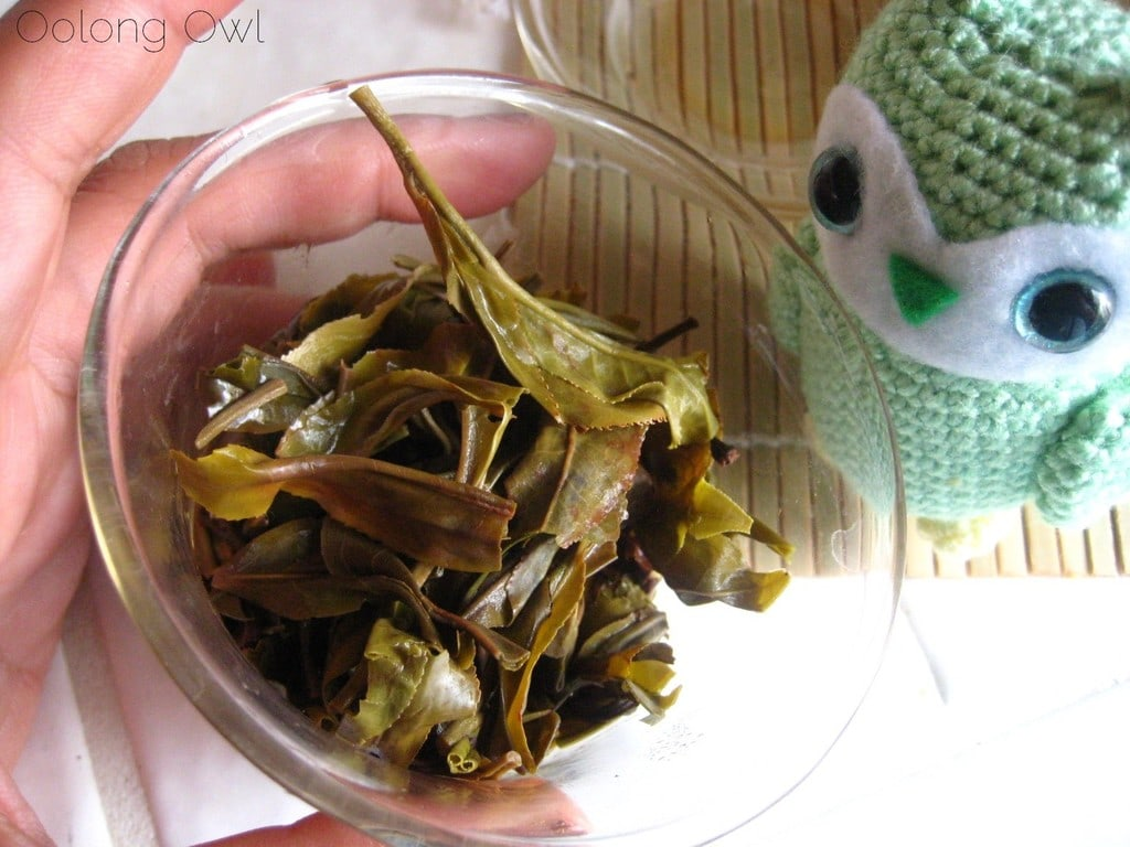 2013 Yiwu Spring Sheng Pu er from Misty Peak Teas - Oolong Owl Tea Review (10)