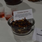 worldteaexpo 2014 day 3 - oolong owl tea review (15)
