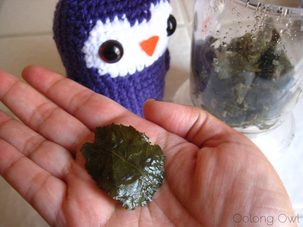 Magnolia Blossom Oolong from Upton Tea Imports - Oolong Owl Tea Review (6)