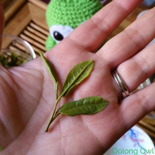 nine lotus green tea from Mandala Tea - Oolong Owl Tea Review (10)