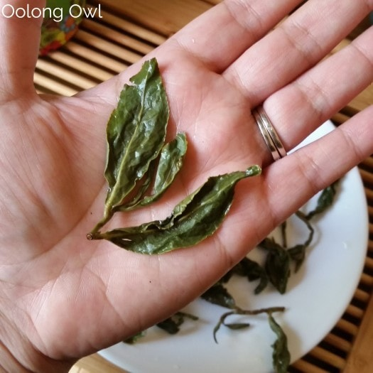 Summus Tea - Oolong owl (3)