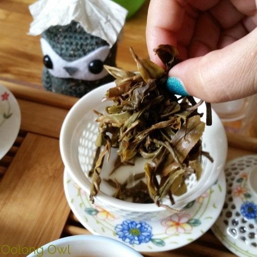 Crimson Lotus 2014 2015 Jingmai Sheng Pu'er Comparison - Oolong Owl Tea Review (13)