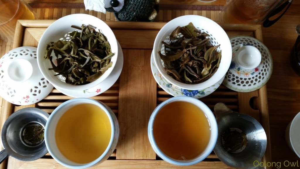 Crimson Lotus 2014 2015 Jingmai Sheng Pu'er Comparison - Oolong Owl Tea Review (14)