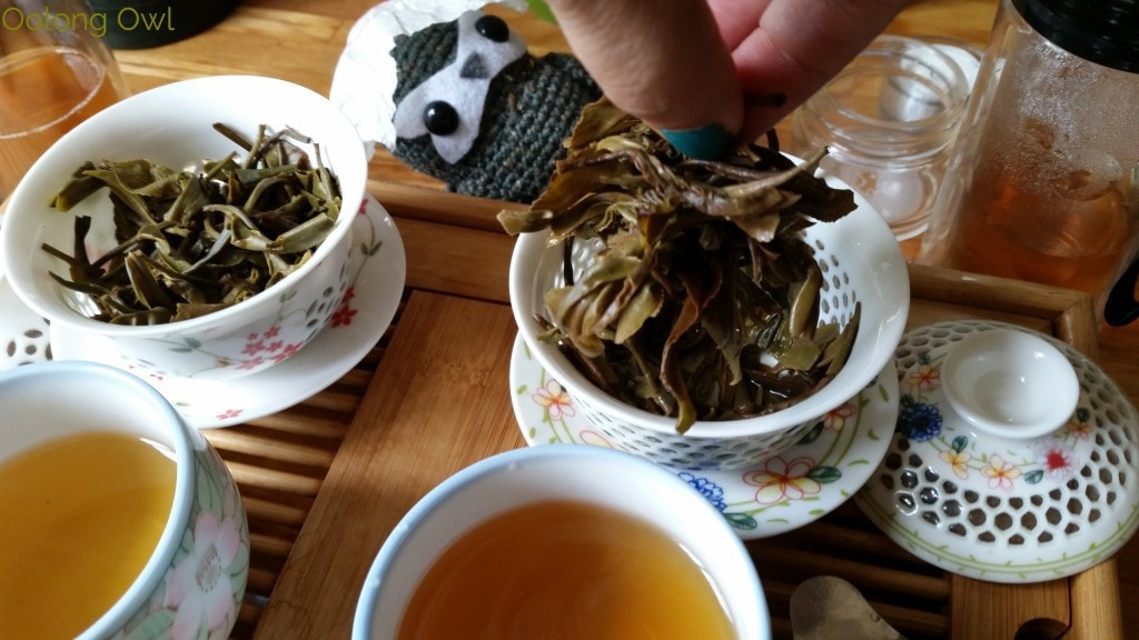 Crimson Lotus 2014 2015 Jingmai Sheng Pu'er Comparison - Oolong Owl Tea Review (15)