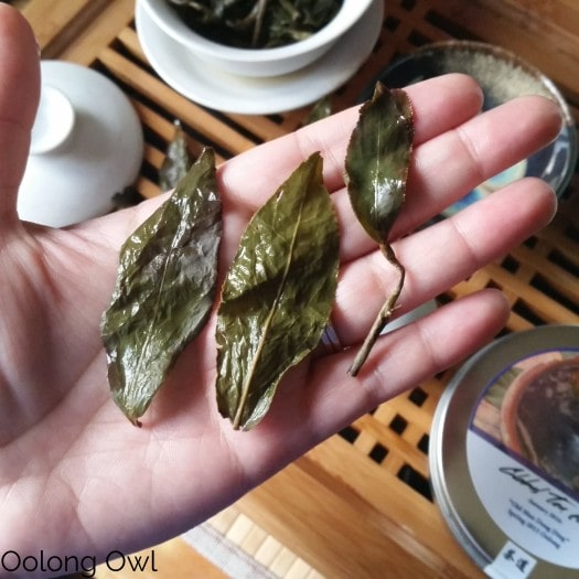 Global Tea Hut Jan 2016 - Oolong Owl (2)