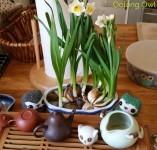 Sunday Tea hoots 13 - tea table flowers (1)