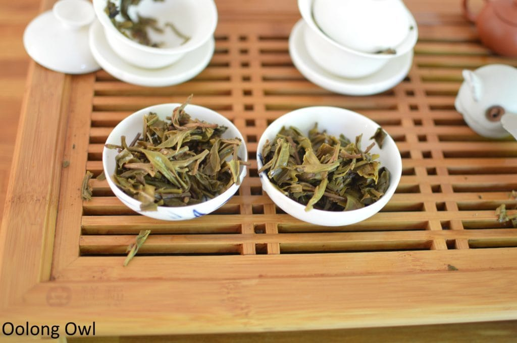 august 2016 white2tea club mengsong - oolong owl (13)