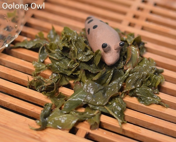 art of tea oolong - oolong owl (8)