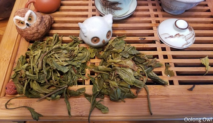 may2017 w2t club - oolong owl (14)