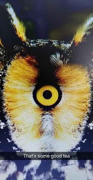 2016 wuliangh - essence of tea - oolong owl (12)